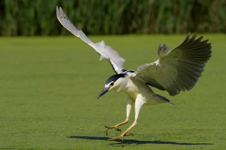 Marais aux oiseaux